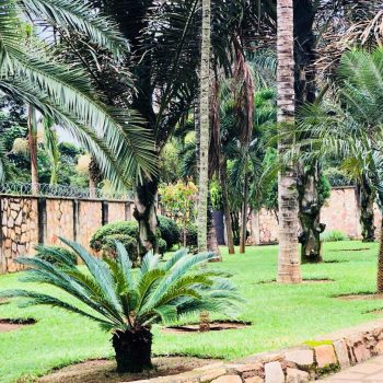 Entebbe Palm Hotel Garden